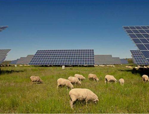 Gransolar desarrolla el primer parque fotovoltaico sin subsidio de Everwood Capital – El Confidencial